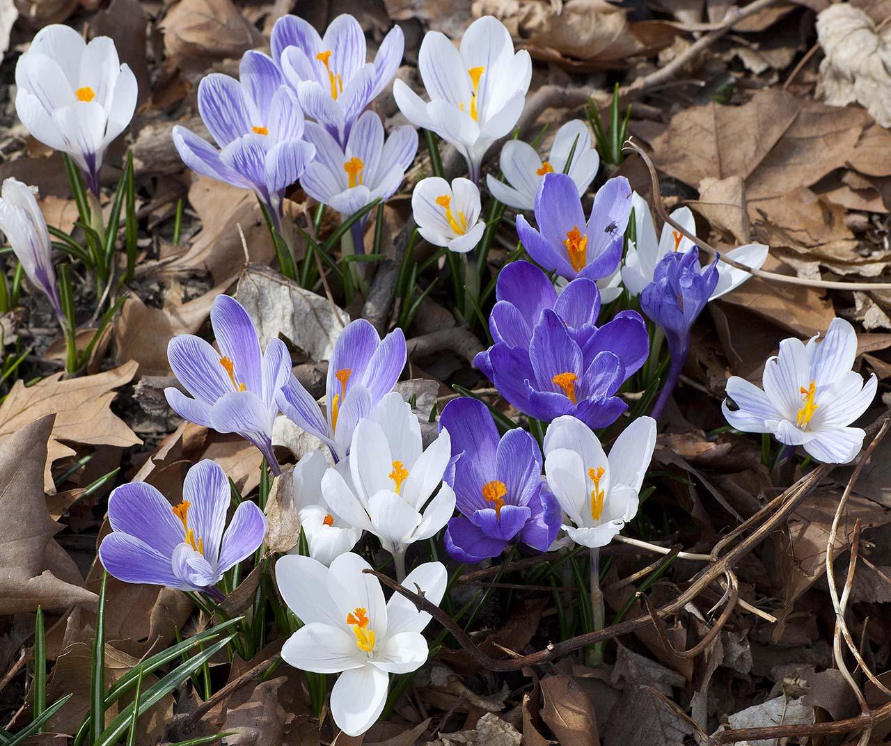 Hình ảnh những cây hoa tím đẹp nhất