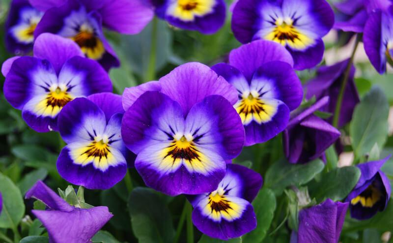 Hoa đẹp màu tím