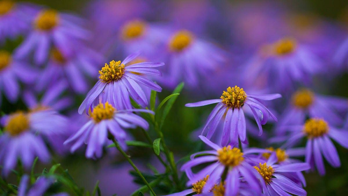 Hoa màu tím đẹp