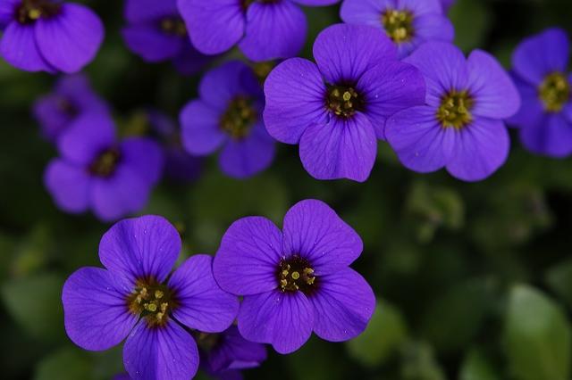 Hoa màu tím nhỏ