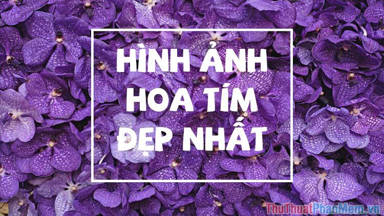 Hoa màu tím - Những hình ảnh hoa màu tím đẹp nhất