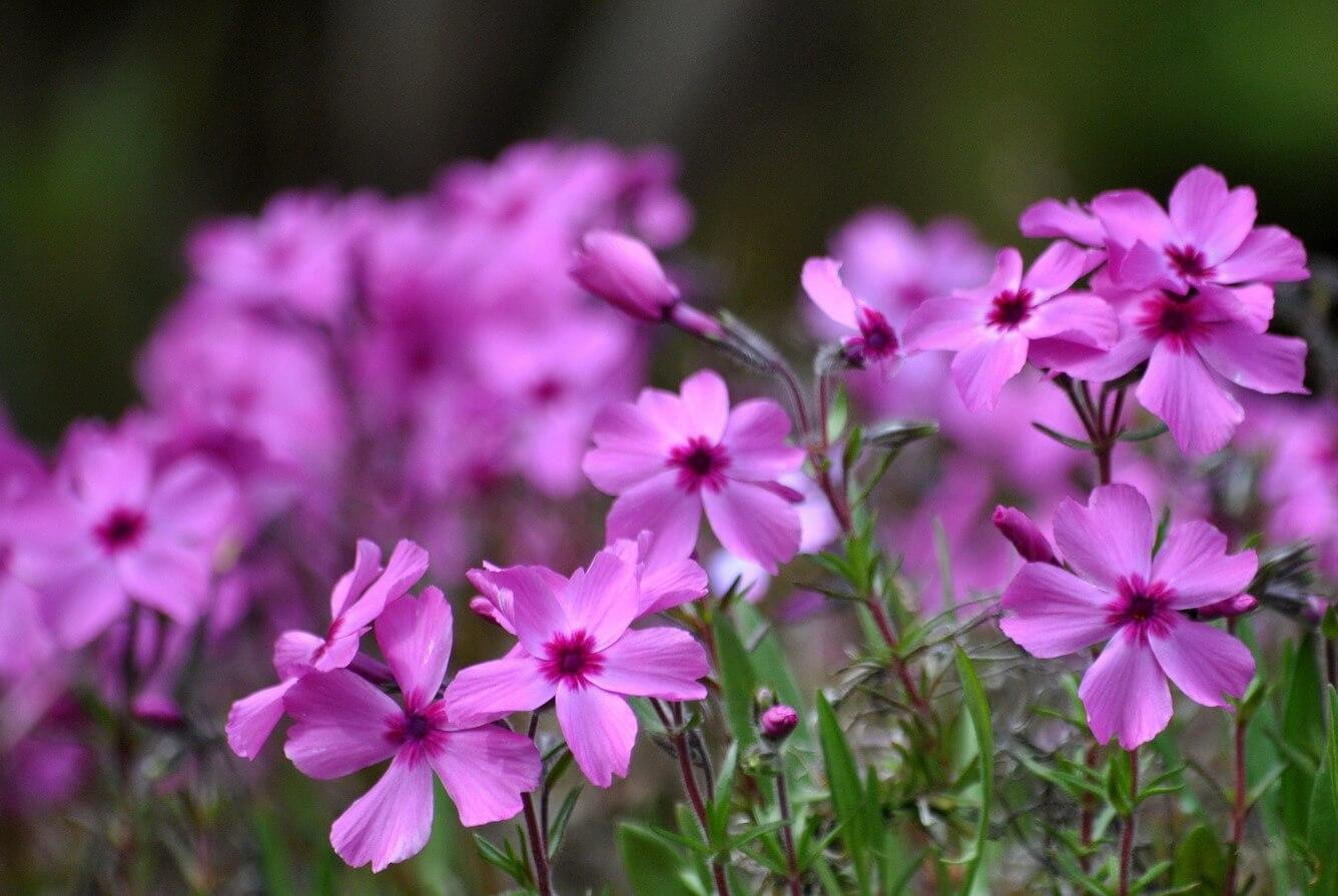 Những bông hoa tím đẹp