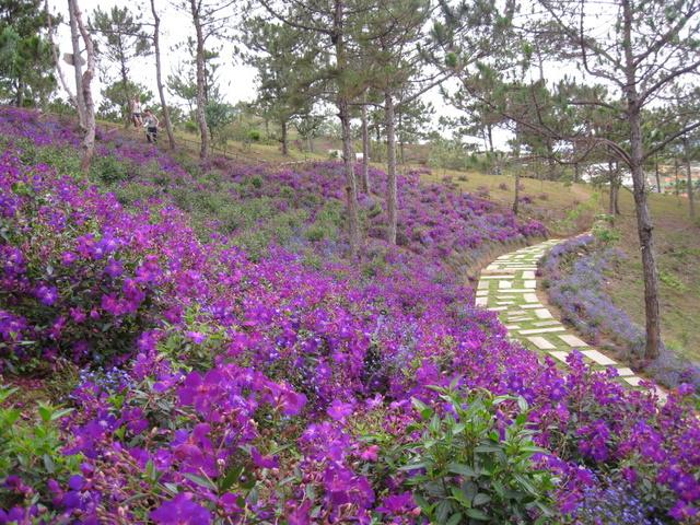 Vườn hoa tím đẹp