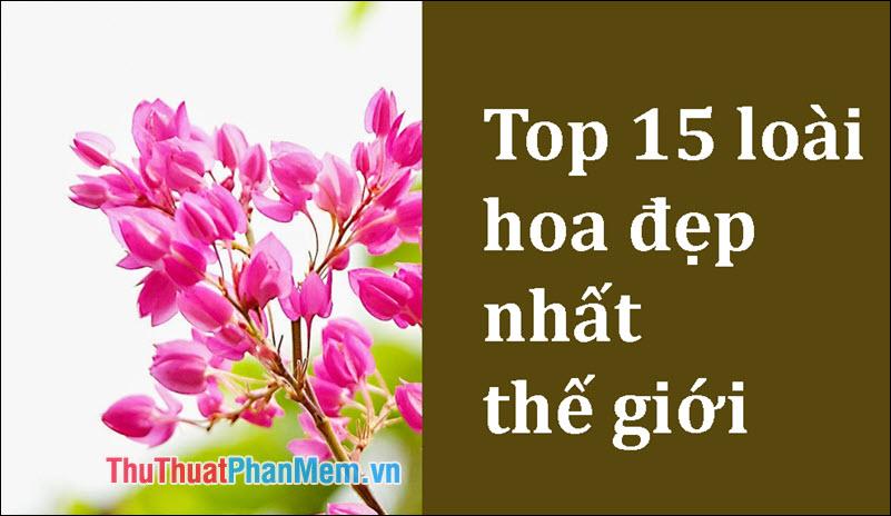Top 15 loài hoa đẹp nhất thế giới