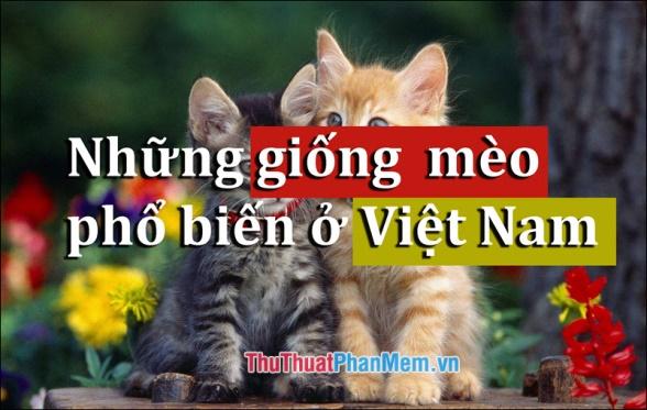 Các giống mèo phổ biến ở Việt Nam