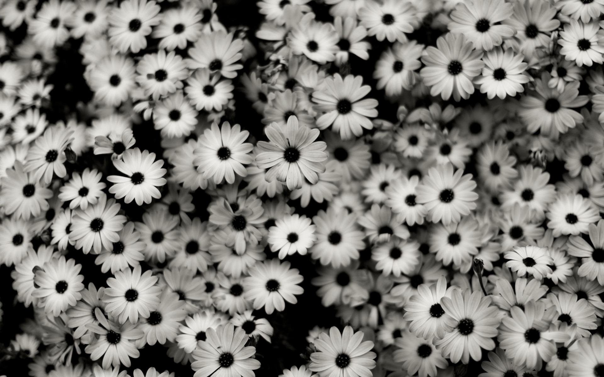 Hình ảnh bông hoa trắng đen