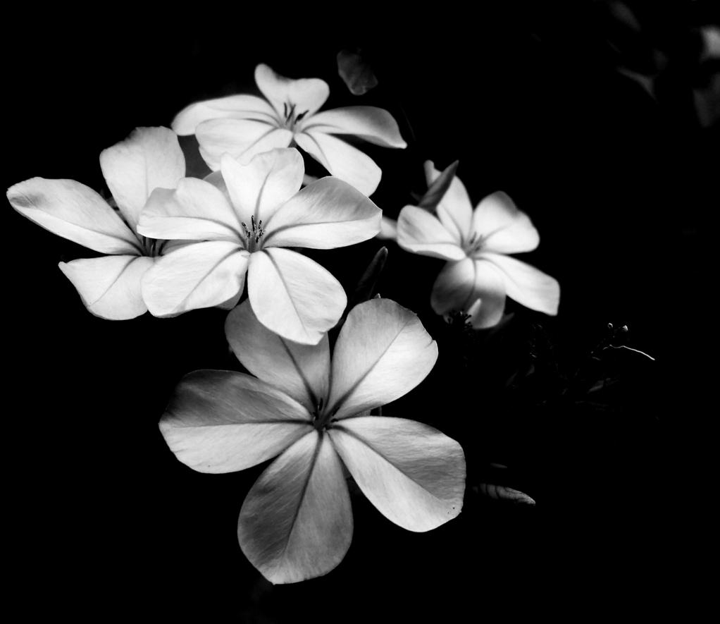 Hình ảnh đen trắng đẹp