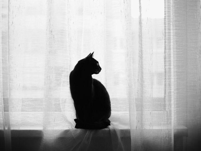 Hình ảnh đen trắng nghệ thuật đẹp