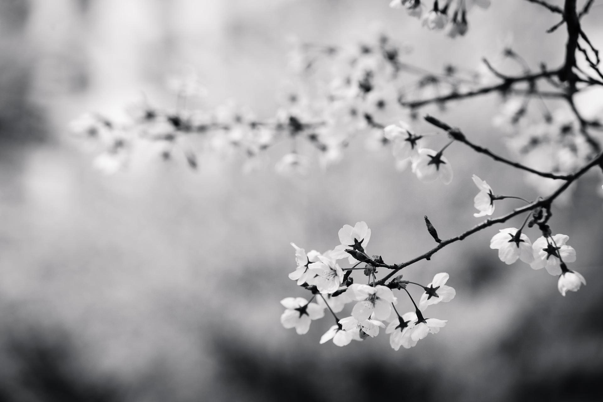 Hình ảnh trắng đen đẹp và độc đáo