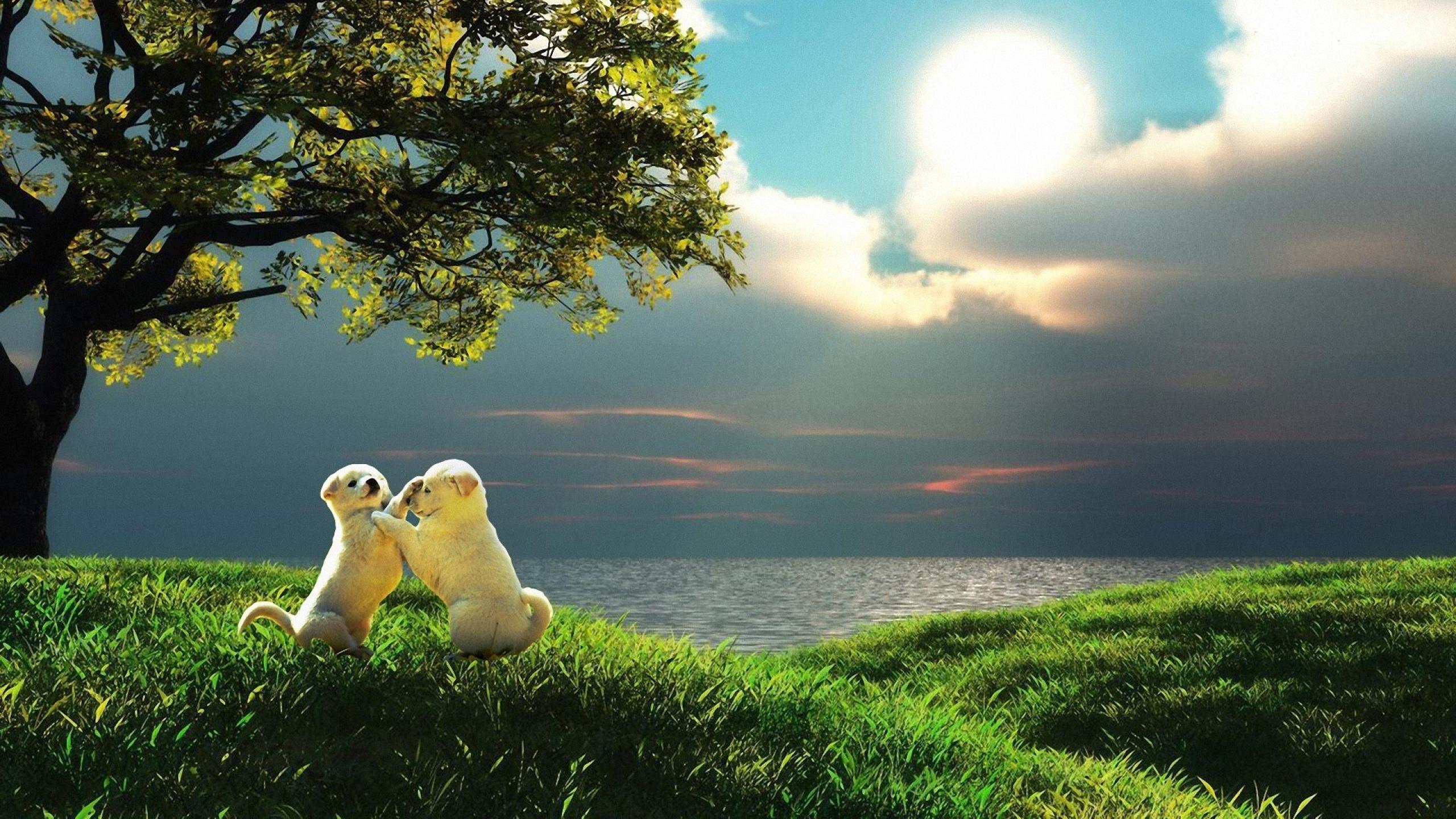Hình nền thiên nhiên đẹp nhất cho Macbook