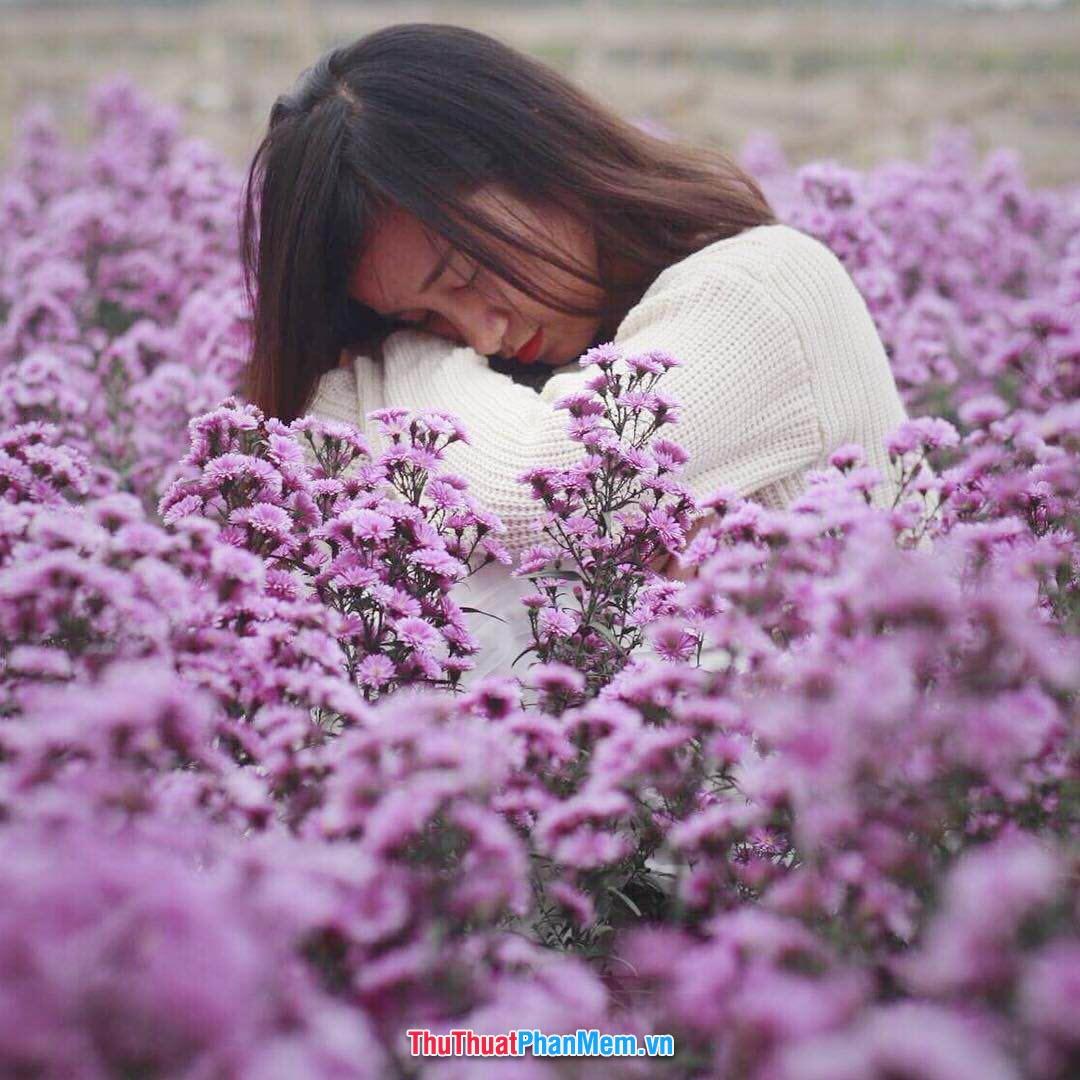 Cô gái xinh đẹp giữa những khóm hoa thạch thảo - món quà tặng vợ hoặc người yêu nhân dịp 8-3