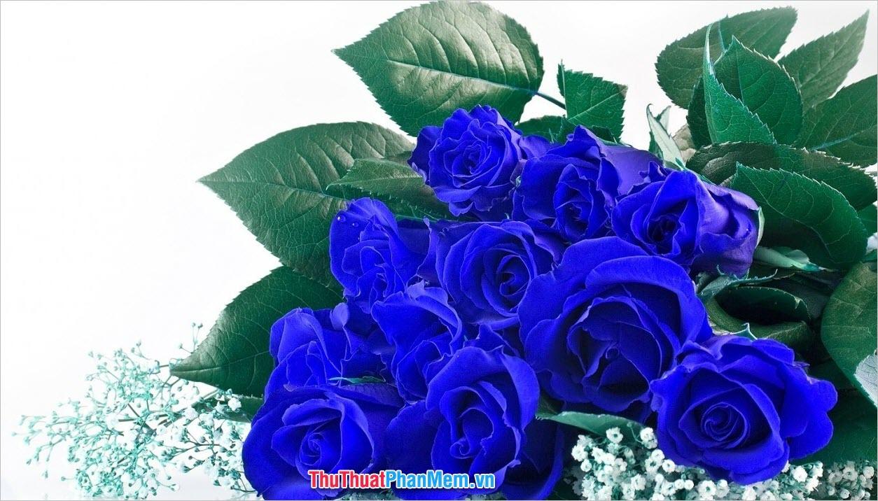 Hoa hồng xanh xinh đẹp cao sang tặng cho vợ hoặc người yêu vào ngày quốc tế phụ nữ