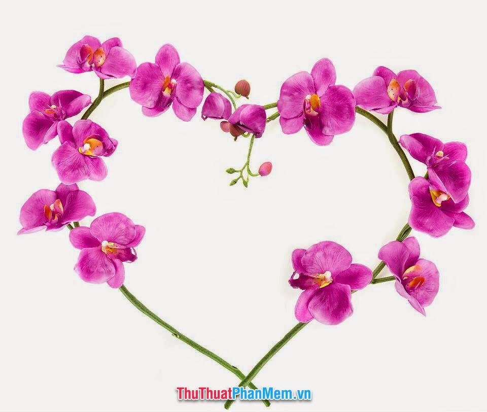 Hoa lan vẽ lên trái tim tình yêu tặng cho vợ hoặc người yêu vào ngày mùng 8 tháng 3