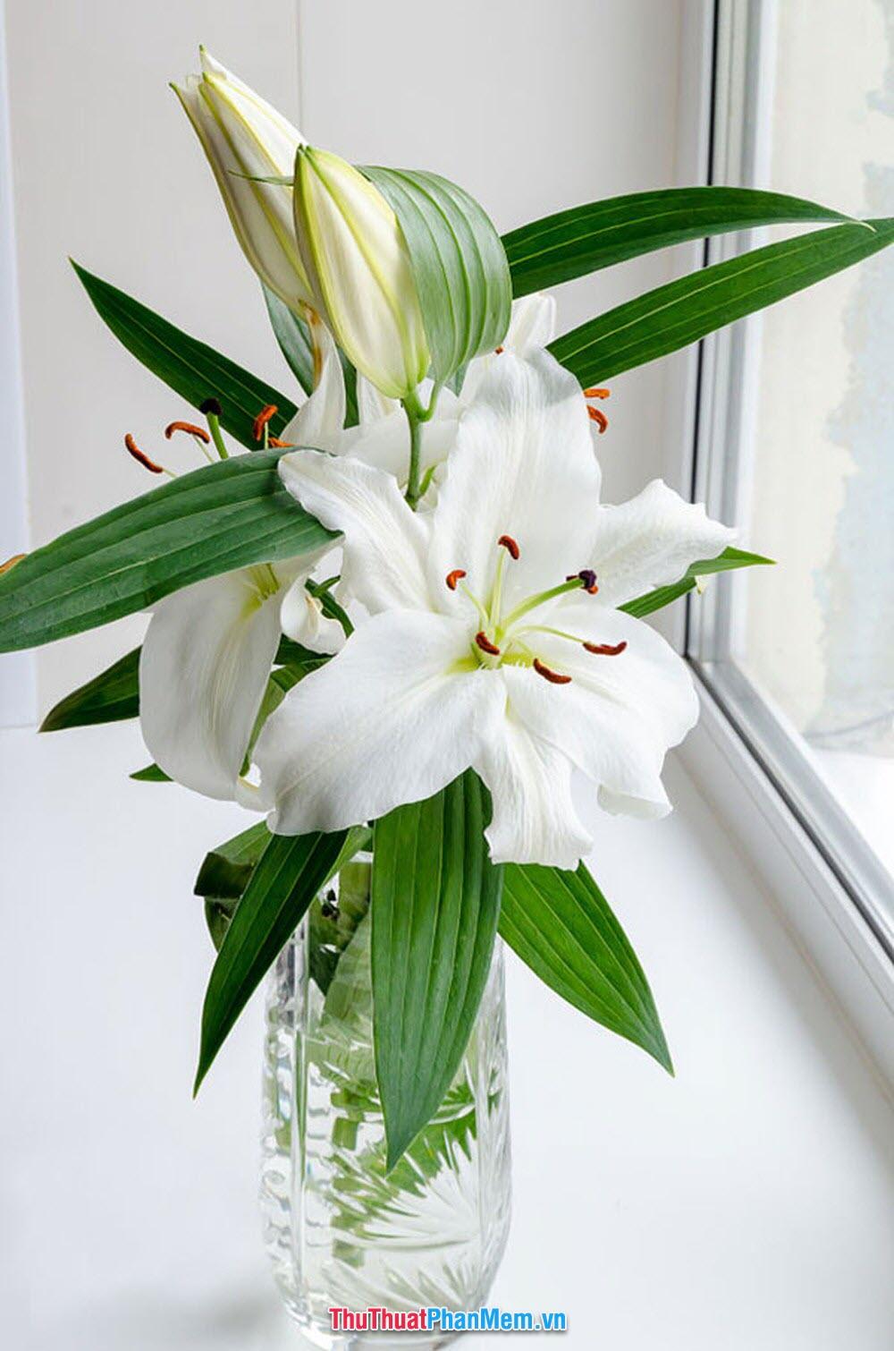 Lọ hoa ly rất đẹp để tặng cho vợ và người yêu vào ngày mùng 8 tháng 3