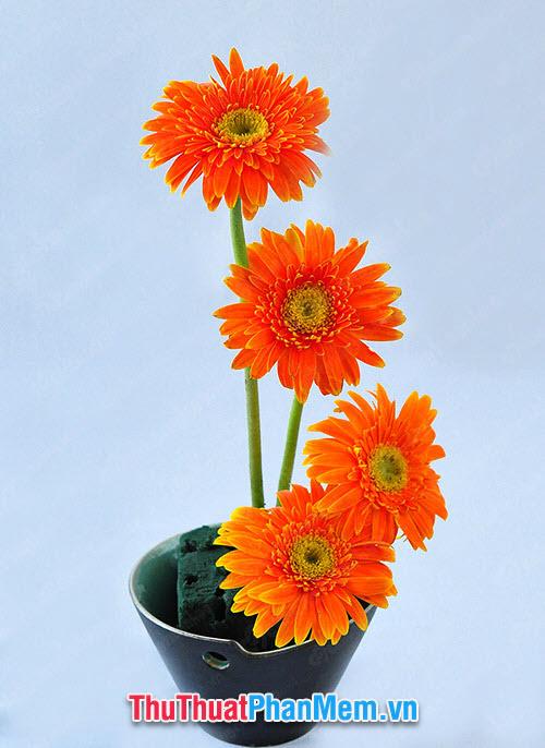 Những bông hoa đồng tiền cam tặng mẹ nhân dịp mùng 8 tháng 3