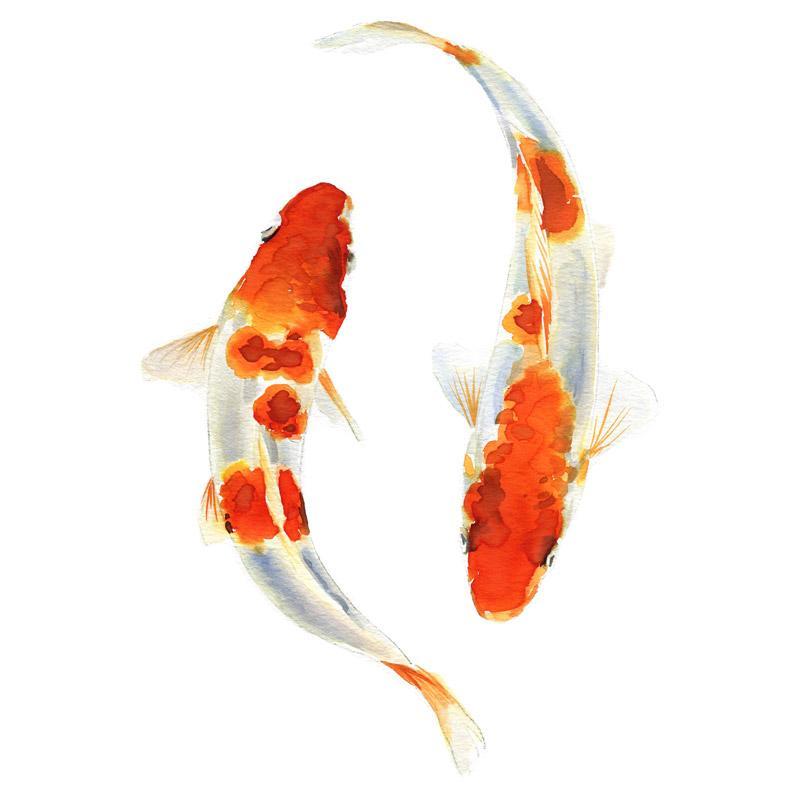 Ảnh cá Koi Nhật Bản