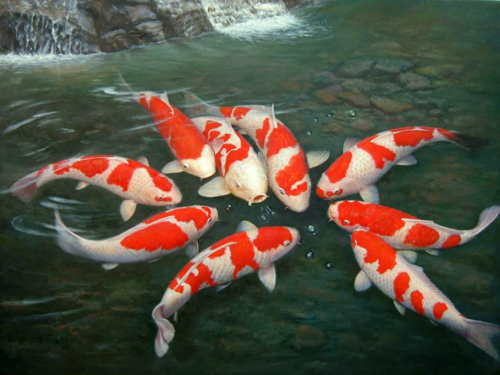 Cá Koi đẹp nhất