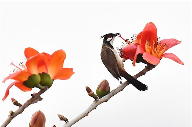Mùa hoa gạo tháng 3