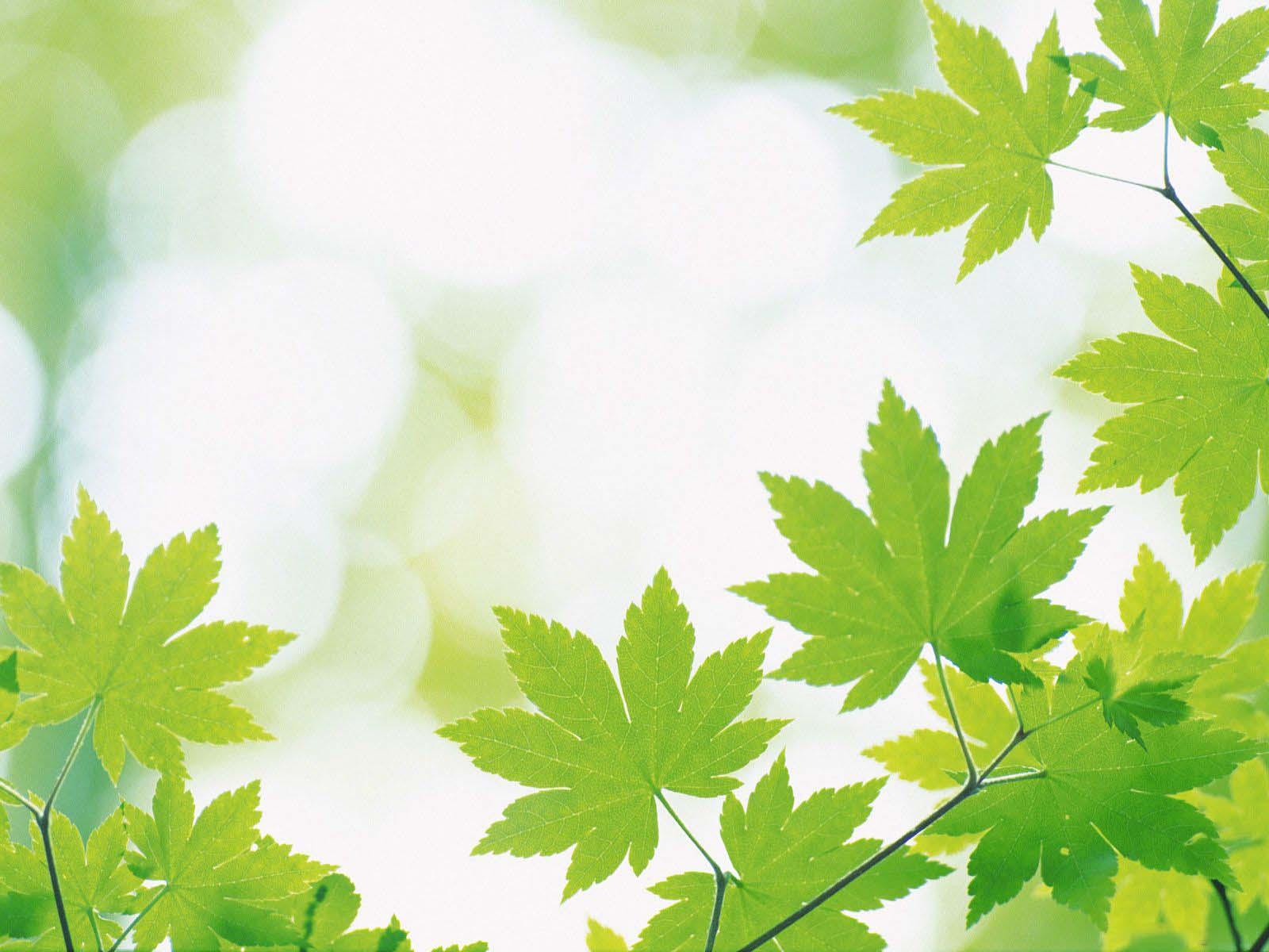 Nền power point lá cây màu xanh đẹp