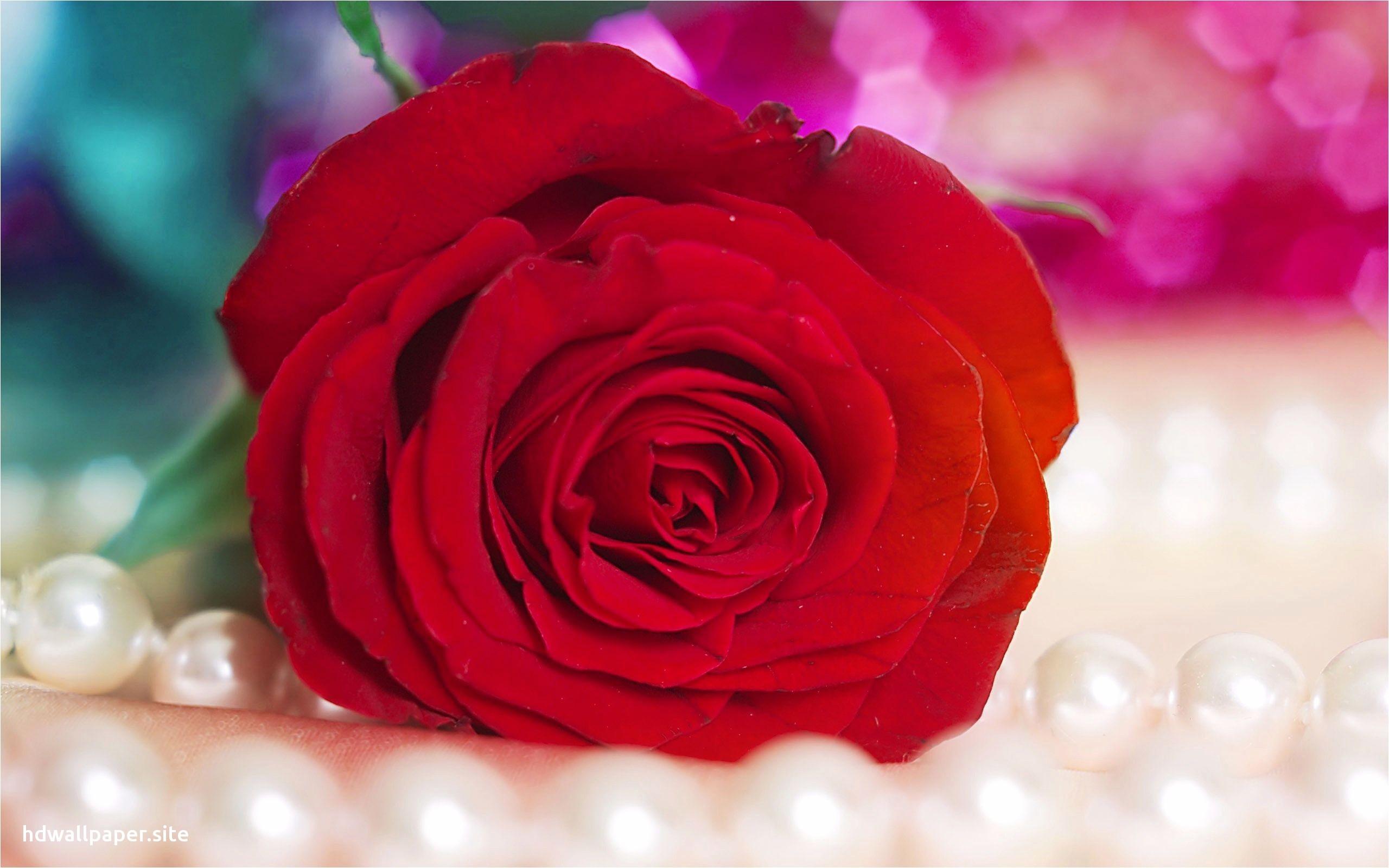 Ảnh bông hoa đẹp nhất