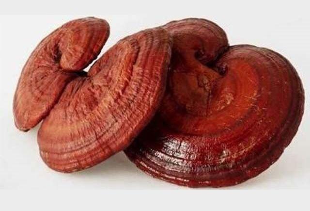 Ảnh cây nấm linh chi đỏ đẹp