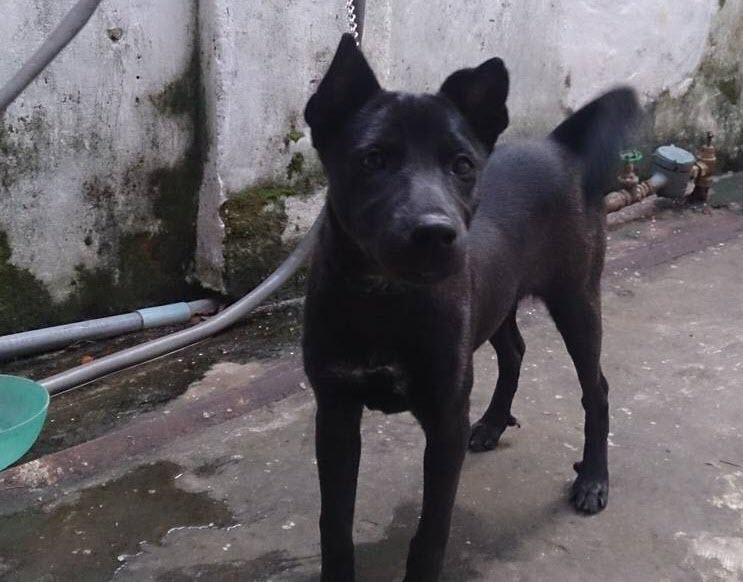Ảnh chó đen đẹp nhất