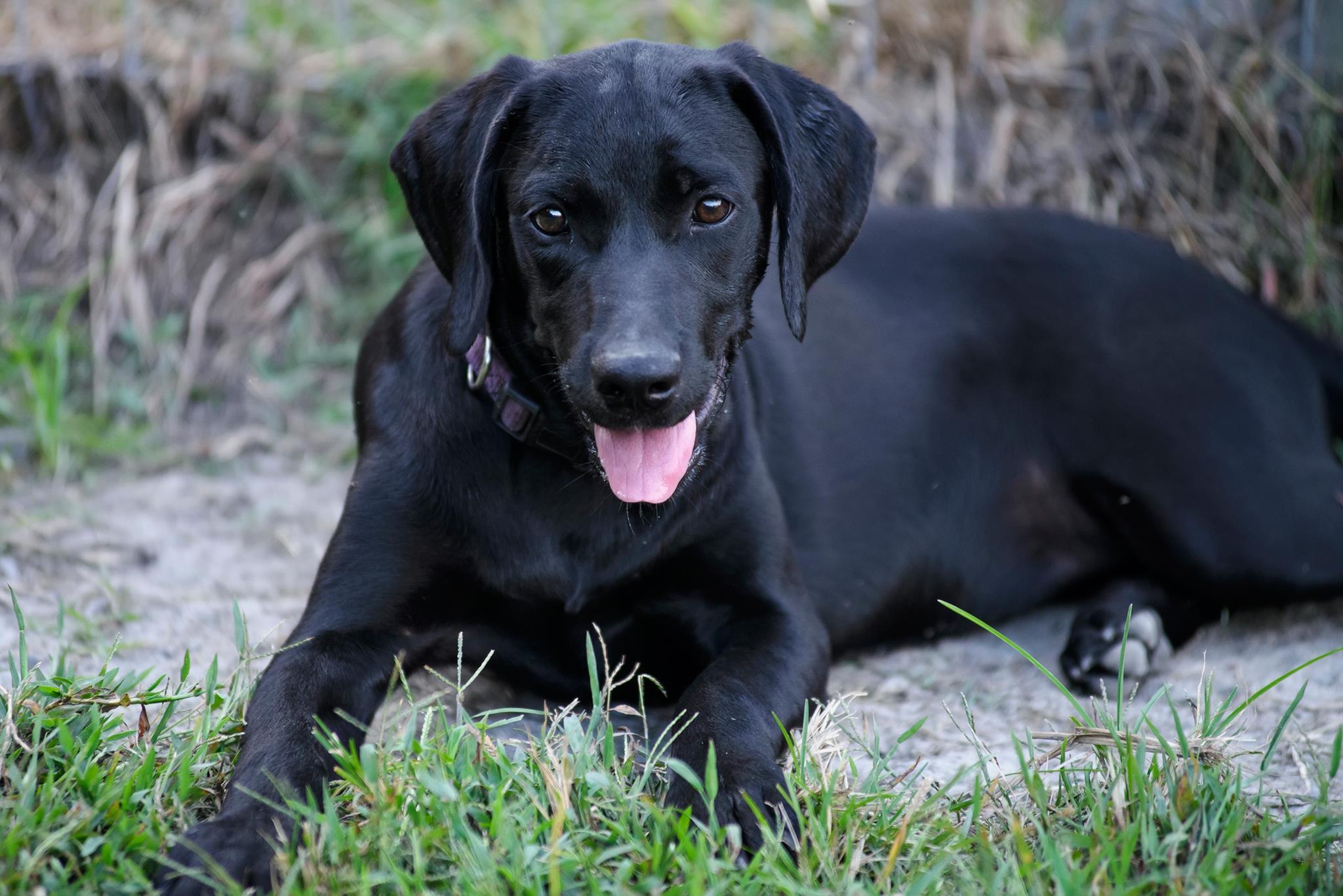 Ảnh chó đen đẹp