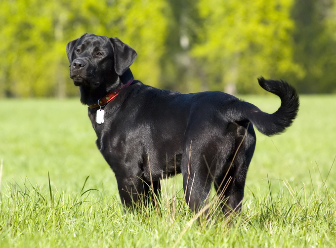 Ảnh chú chó mực đẹp nhất
