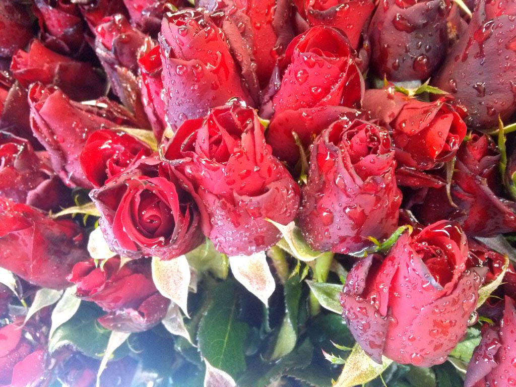 Hình ảnh bó hoa hồng đỏ đẹp tươi