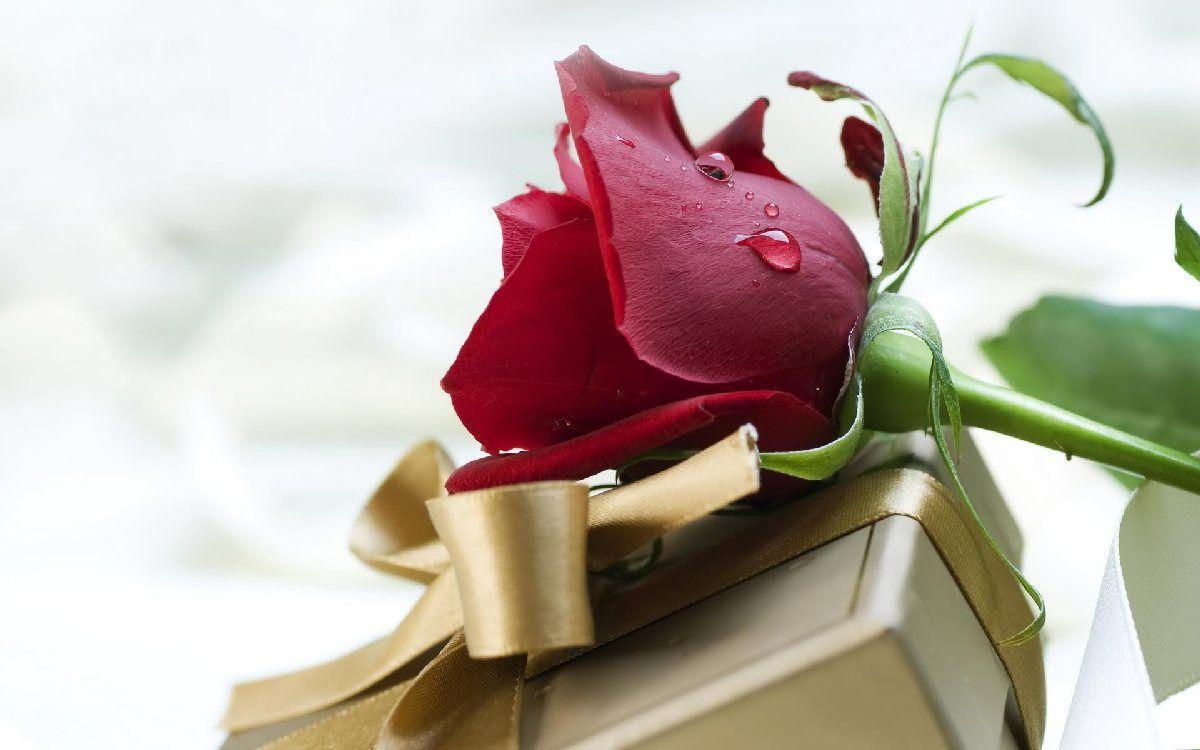 Hình ảnh bông hoa hồng đỏ đẹp