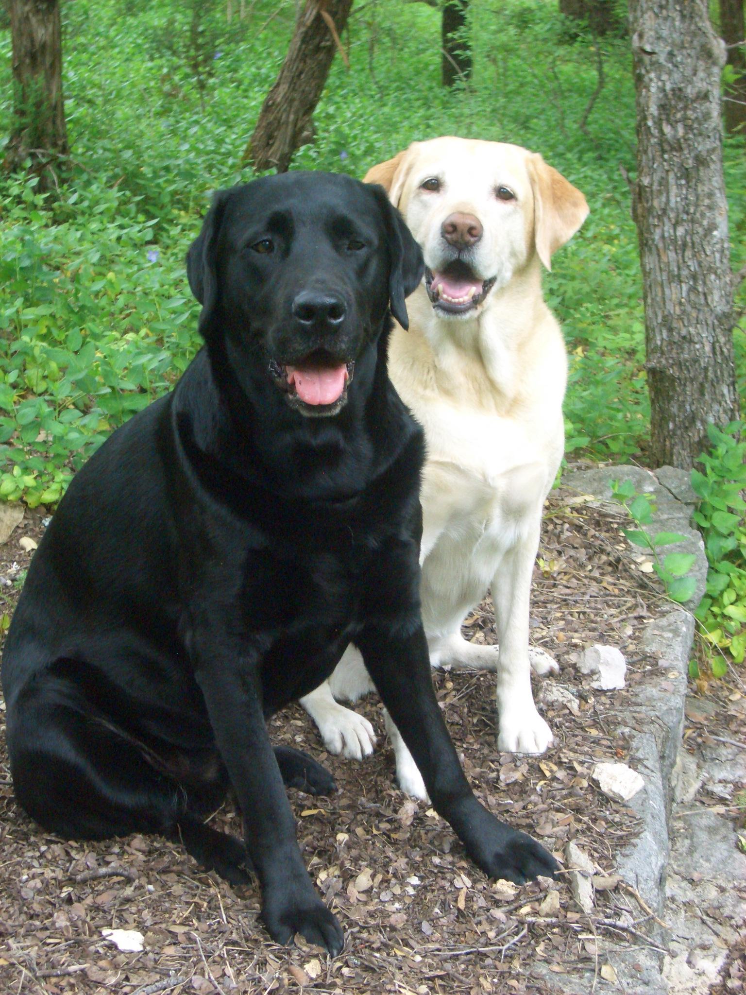 Hình ảnh chó đen và chó trắng đẹp