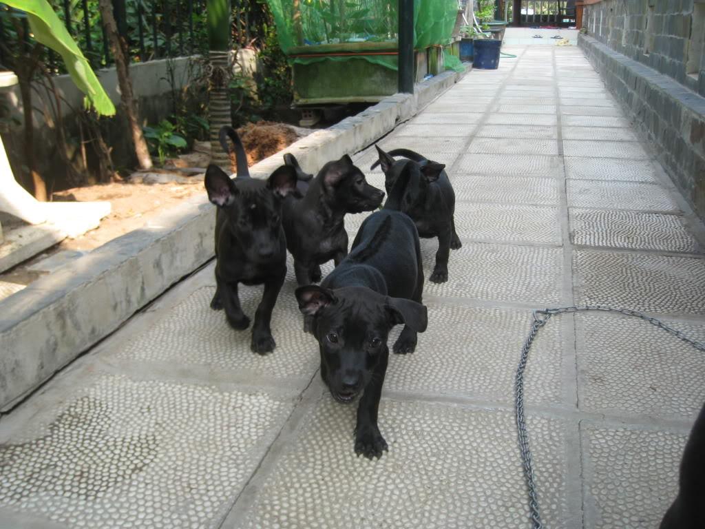 Hình ảnh chó đen