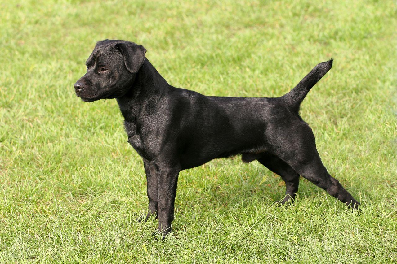 Hình ảnh chú chó mực cực đẹp
