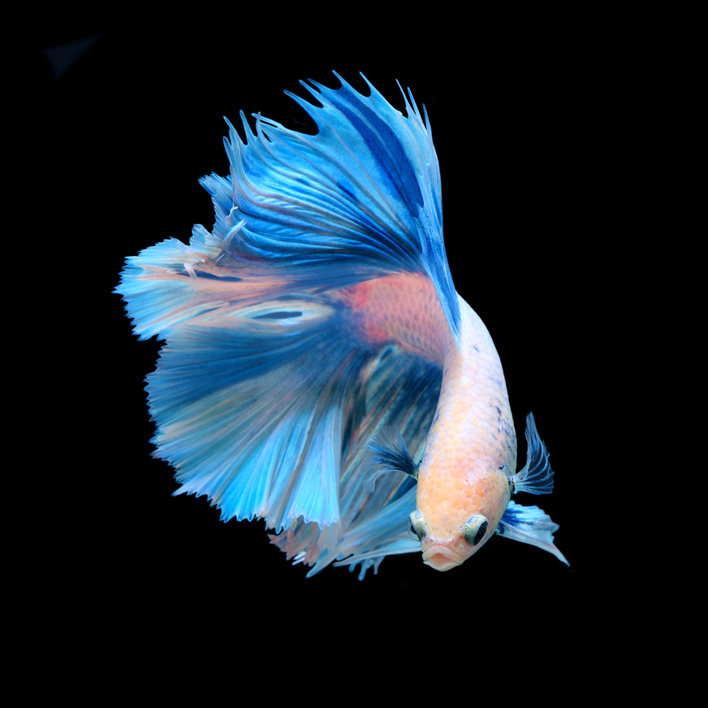 Hình ảnh con cá đẹp