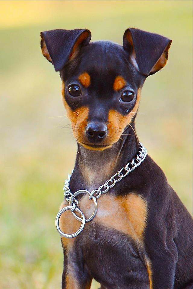 Hình ảnh con chó đẹp