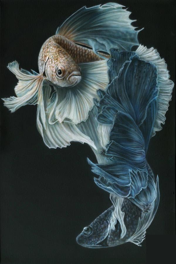 Hình ảnh đẹp nhất của cá Chọi