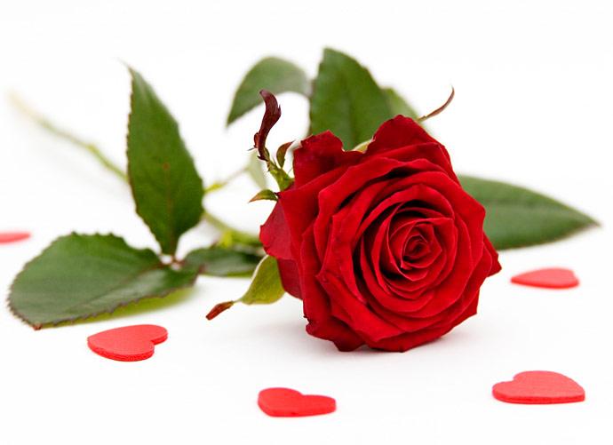 Hình ảnh hoa hồng đỏ và trái tim