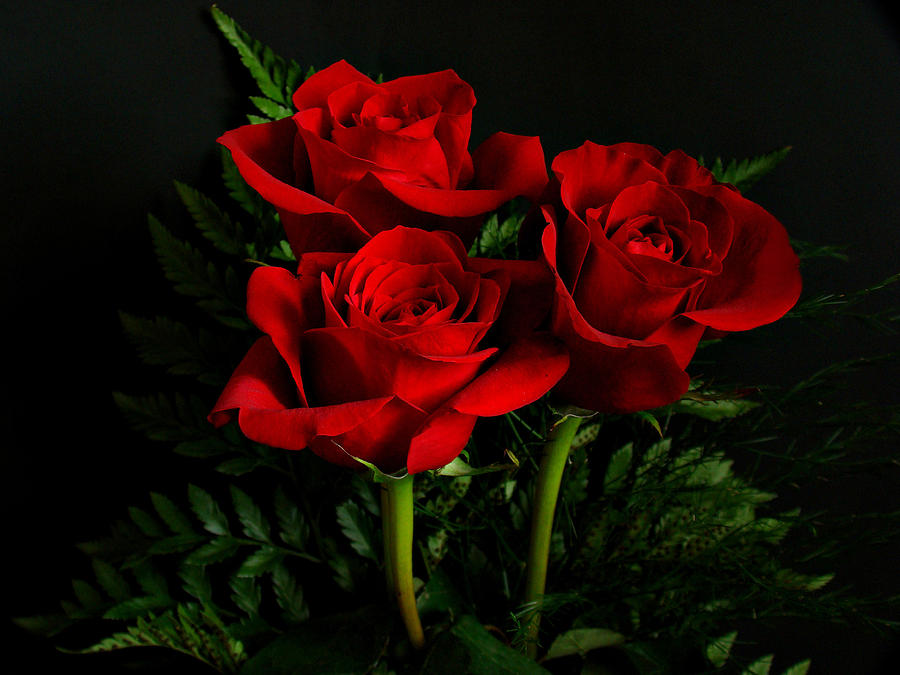 Hình ảnh hoa hồng đỏ
