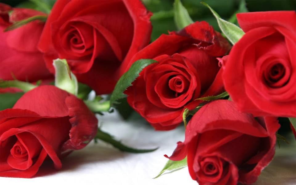 Hình ảnh hoa hồng màu đỏ