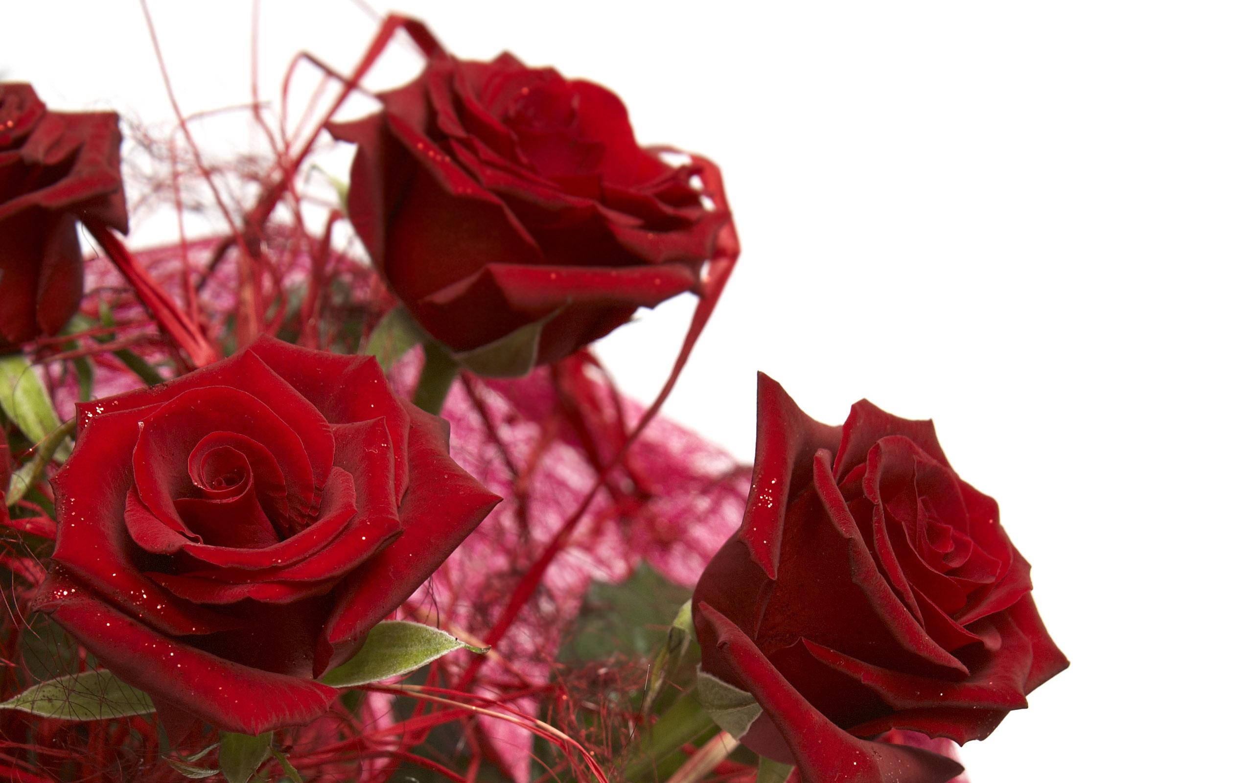 Hình ảnh những hoa hồng đỏ đẹp