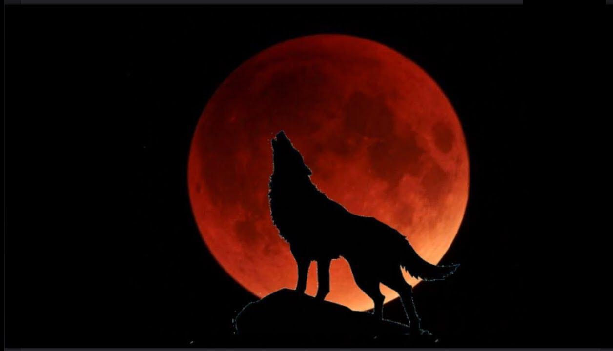 Hình ảnh Trăng Máu và chó sói