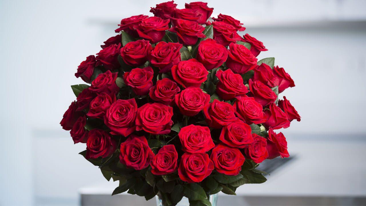 Hình bó hoa hồng đỏ đẹp