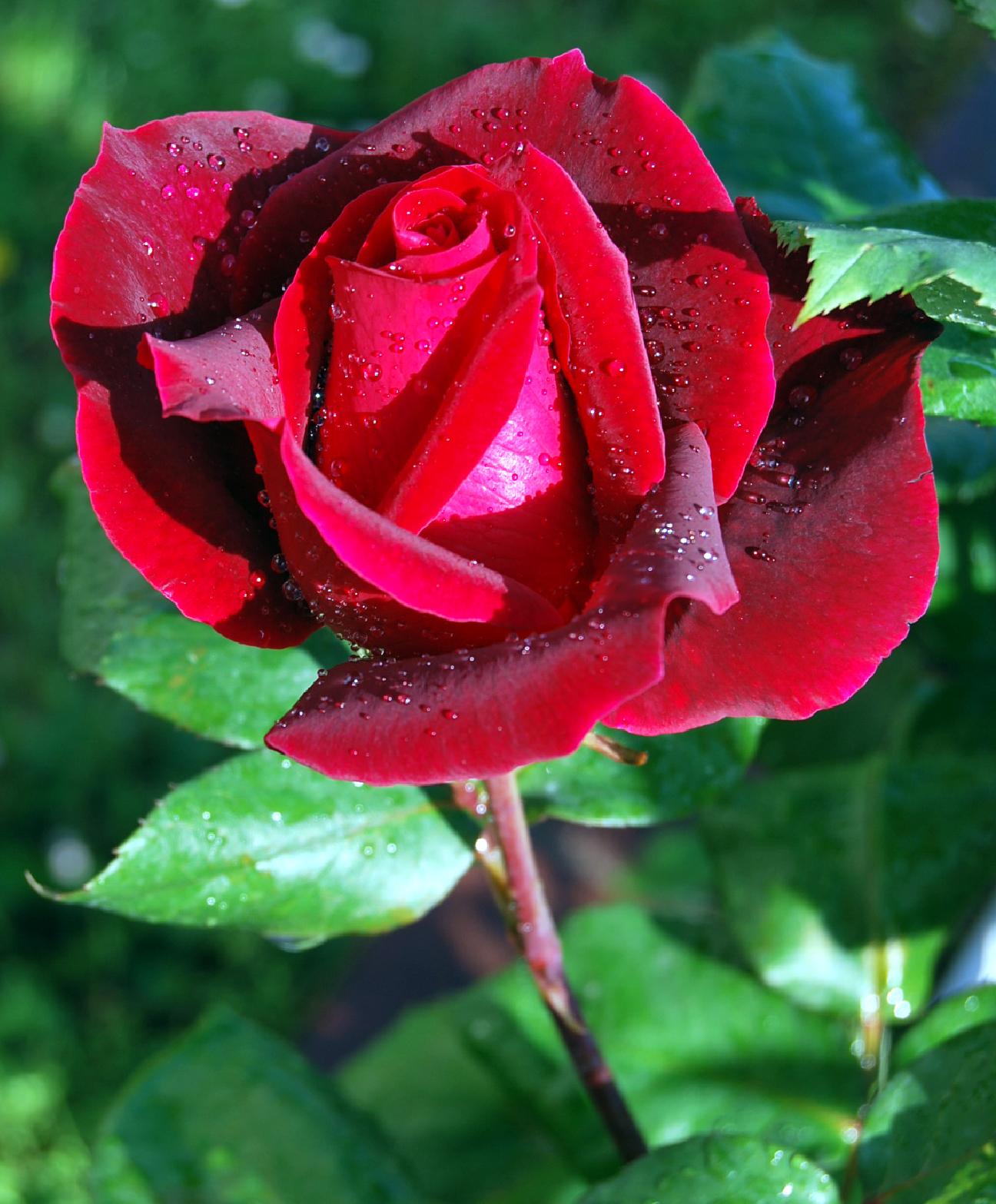 Hình bông hoa đẹp nhất