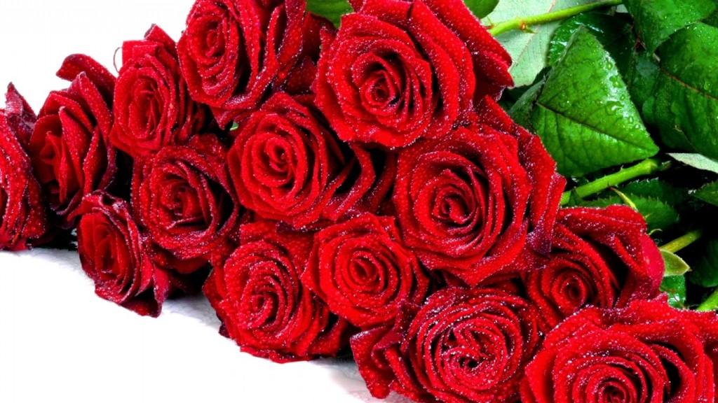 Hình bông hoa hồng màu đỏ đẹp