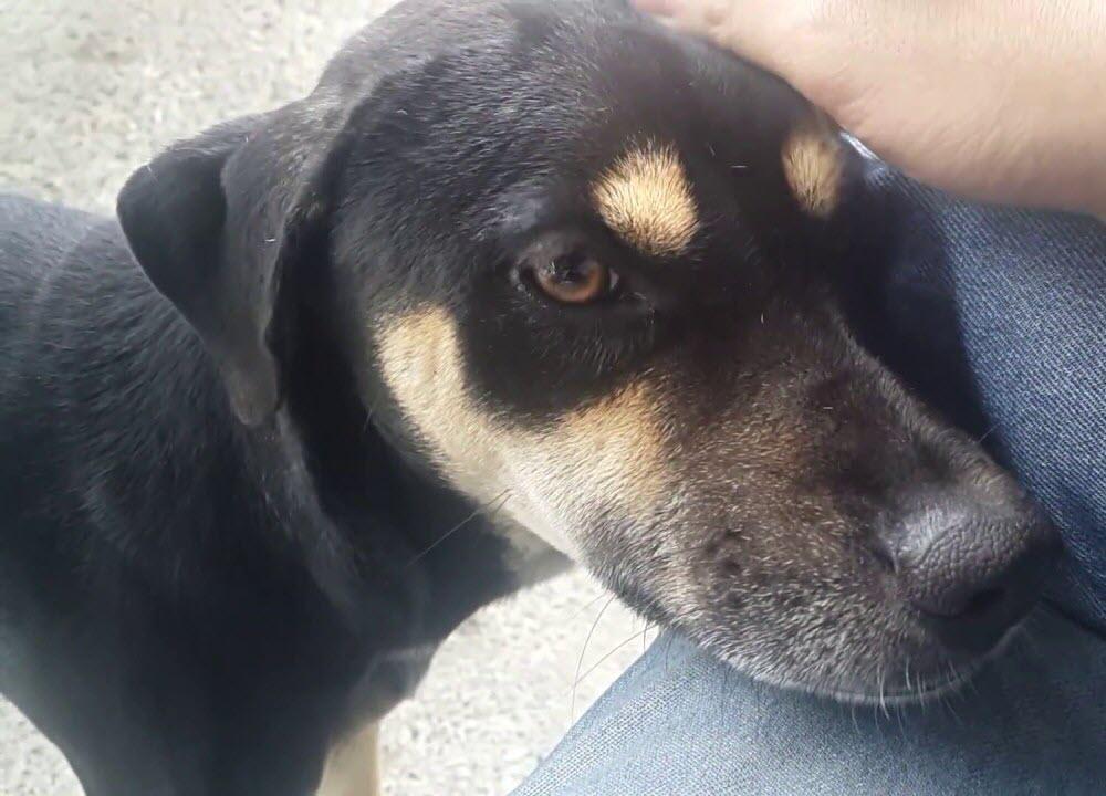 Hình chó đen đẹp nhất