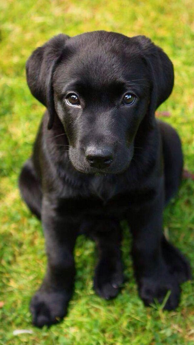 Hình con chó đẹp