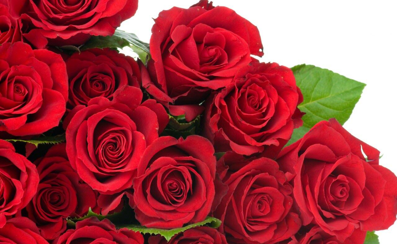 Hình hoa đẹp nhất