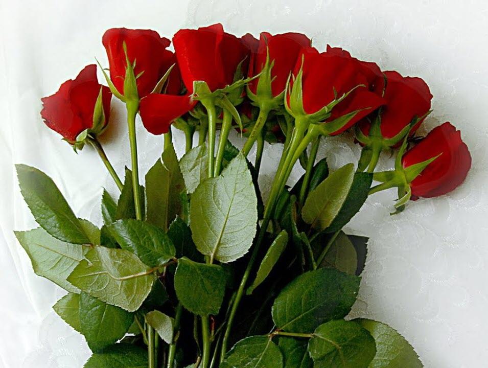 Hình hoa hồng đẹp