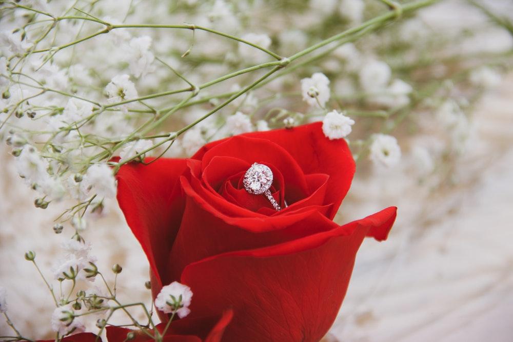 Hình hoa hồng đỏ đẹp nhất