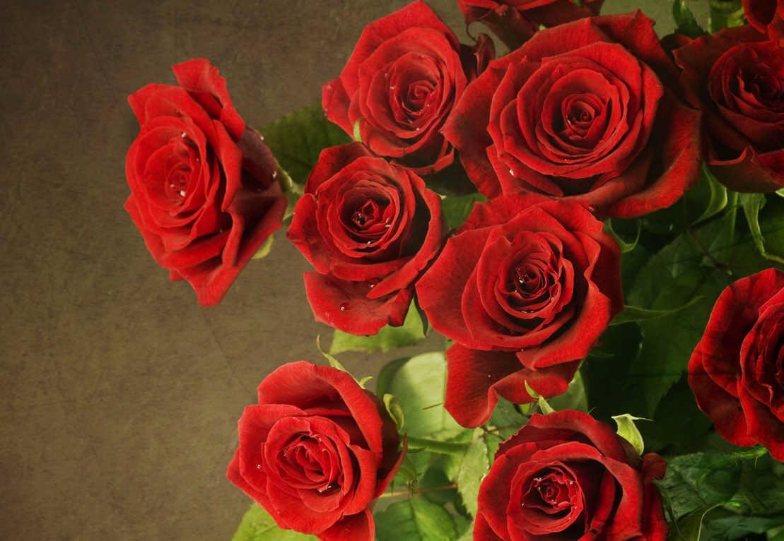 Những bông hoa hồng màu đỏ